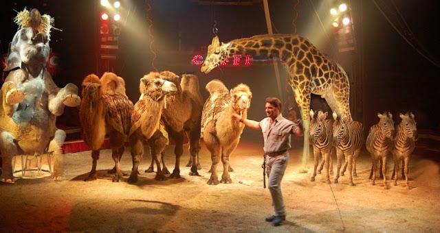 Circo con animali Imola, via libera al ritorno