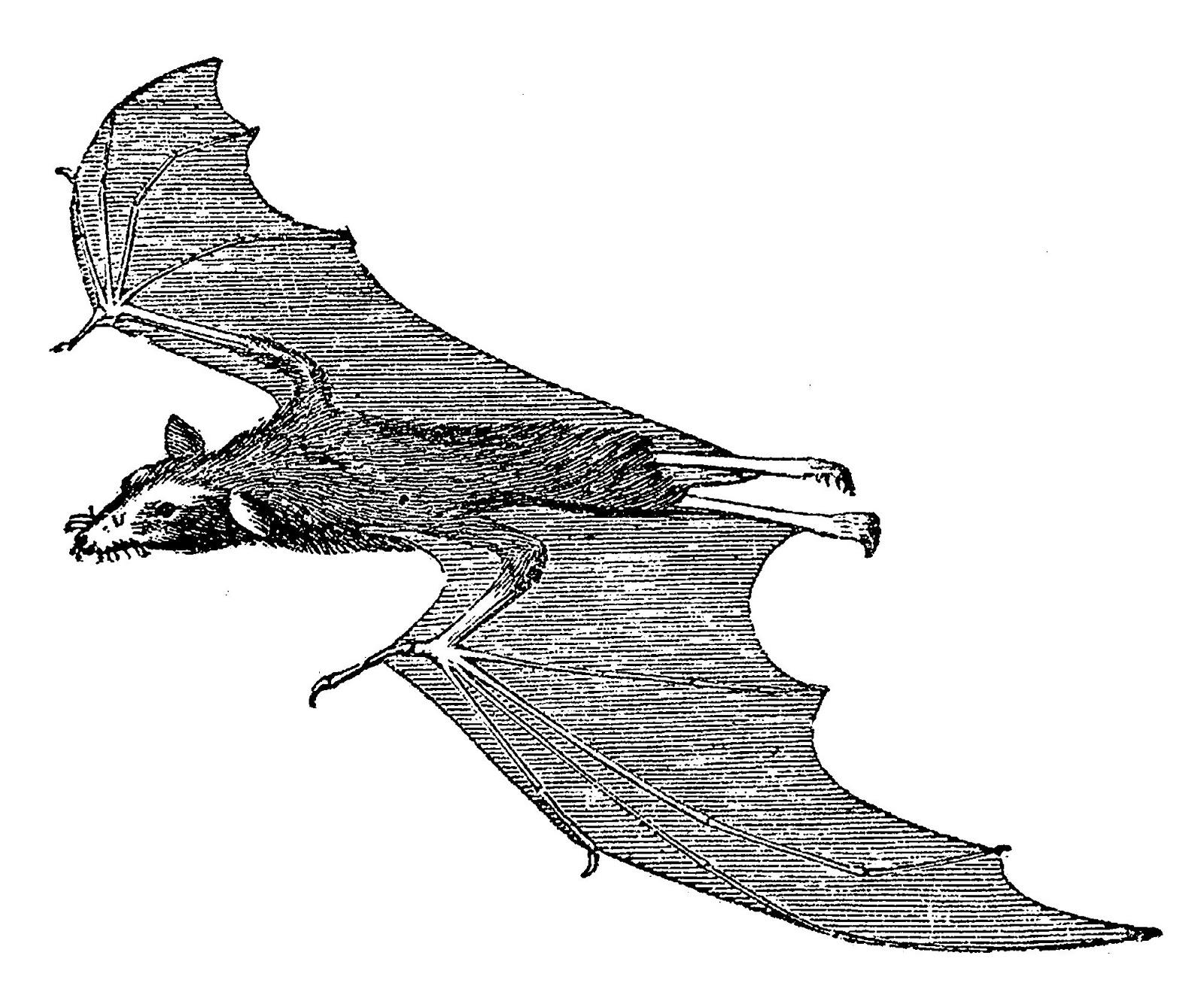 Digital Stamp Design: Halloweeen Scary Flying Vampire Bat ...