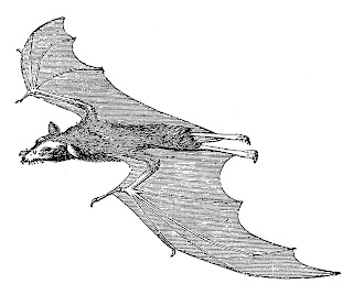 bat halloween image scary clipart digital crafting download