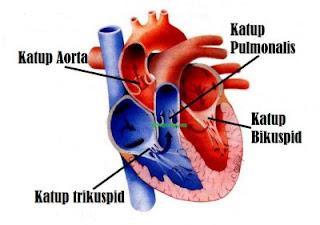 Obat Penyakit Katup Jantung Herbal