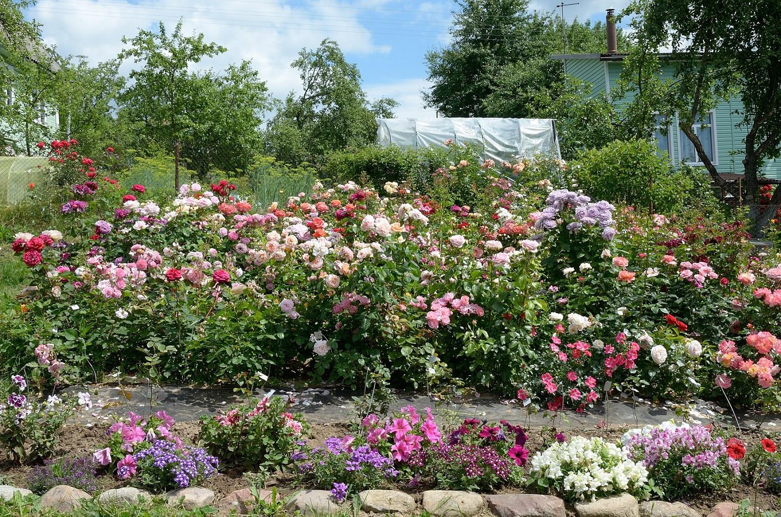 Каталог розы кузнецова