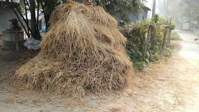 Picture of a pile of paddy straw