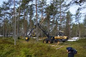 Orman Mühendisliği nedir
