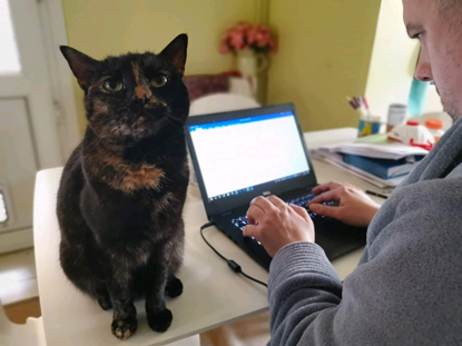 tortoiseshell cat sitting on desk next to man typing on laptop