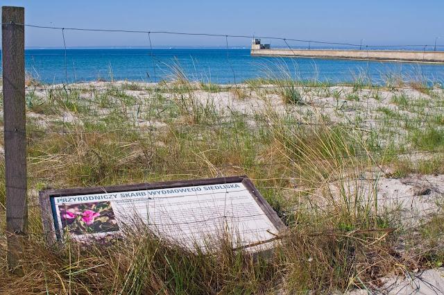 wydmy na Helu, roślinność, plaża, miasto