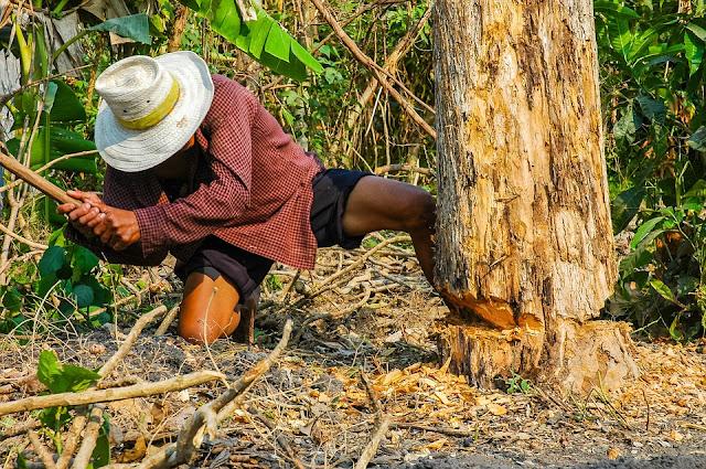 क्या होगा अगर पृथ्वी पर के सारे पेड़ काट दिए जाए? | what will happen if all the trees in the earth disappear