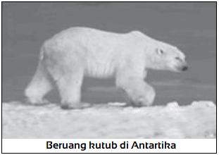 Contoh Fauna di Daerah Kutub