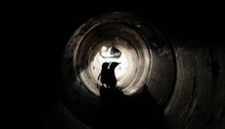 Underpass Penguin di Selandia Baru