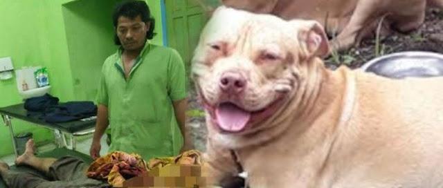 Anak di Gigit Anjing Tetangga, Orang tua Bocah Balas Gigiti Anjing Tersebut
