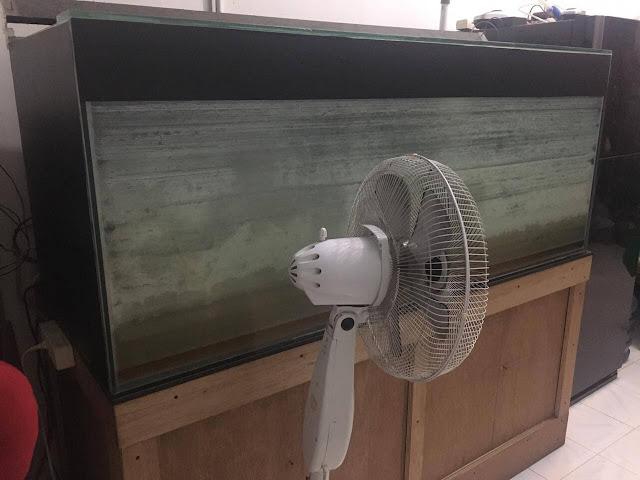 Cara Membersihkan Kerak Kaca Aquarium Paling Ampuh