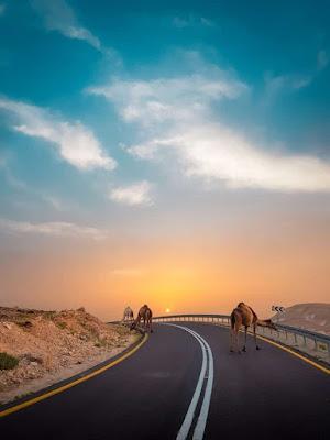 أفضل الأماكن للزيارة وأنشطة ممتعة للقيام بها في الكويت