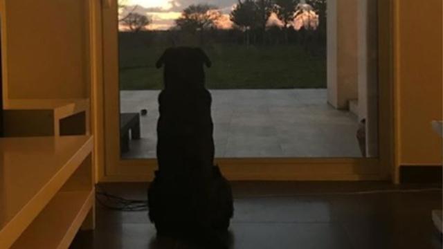 Εμιλιάνο Σάλα: Συγκινεί η φωτογραφία του σκύλου του που τον περιμένει στην πόρτα να γυρίσει