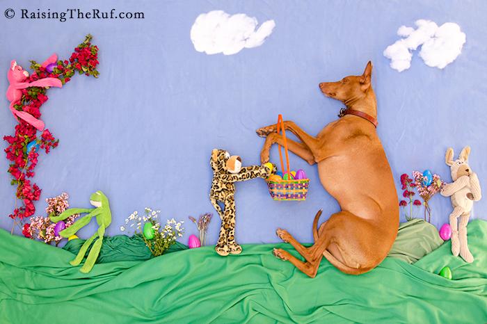 Easter Egg Hunt Bunny Rabbit Happy Easter Pharaoh Hound Dog adventures while sleeping Rufus Sara Rehnmark