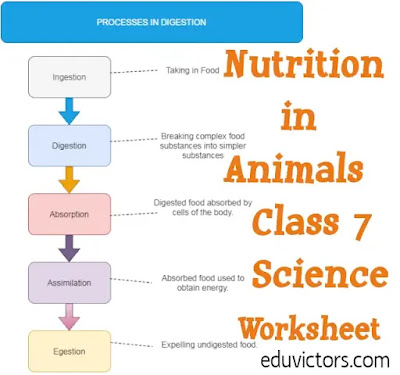 CBSE Class 7 Science Chapter 2 - Nutrition in Animals (Worksheet)(#eduvictors)(#Class7Science)