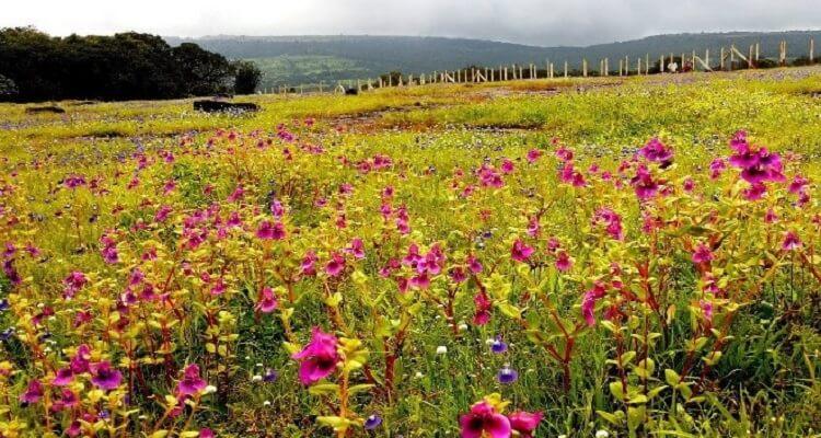 lembah seribu bunga