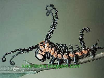 jenis-jenis serangga
