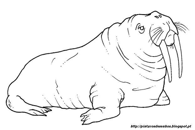Desenhos Para Colorir Desenhar E Pintar Desenhos De Animais