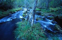 Río Mente - Rivus Homonti