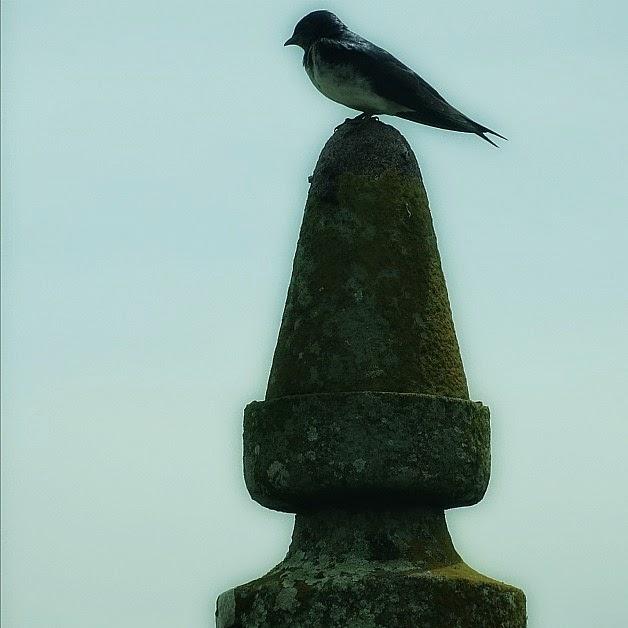 Pássaro sobre uma das Guaritas do Fuerte de San Miguel, Chuy