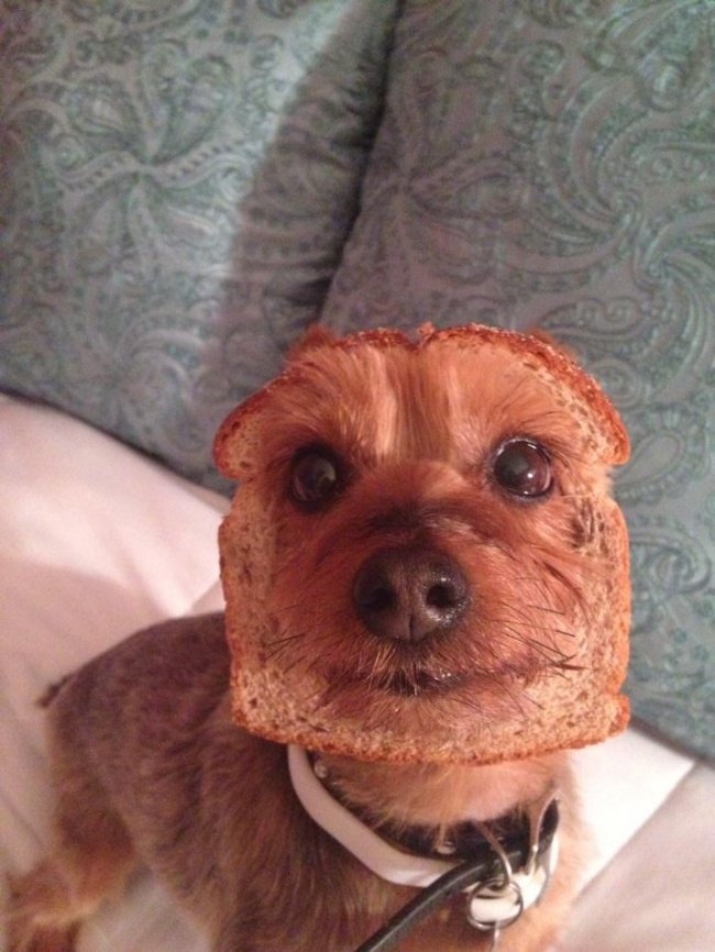 6 fotos hilárias e confusas que farão você rir