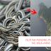 """Brazil's Snake Island """" Isla Na Punong Puno Ng mga Ahas """""""