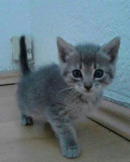 Cuidados de un gato recién nacido