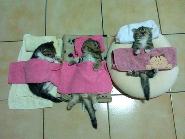 Funny kittens napping joke picture
