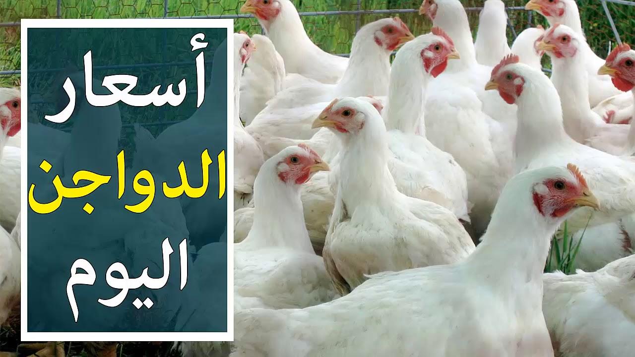 أسعار بورصة الدواجن عبدالله درويش 2021