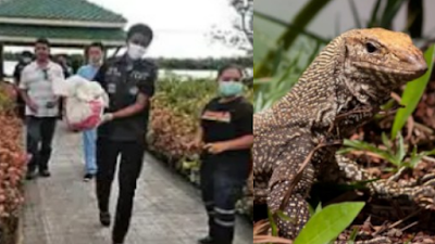 Newborn Baby Devoured By Dangerous Reptiles After Being Dumped By The Waterside