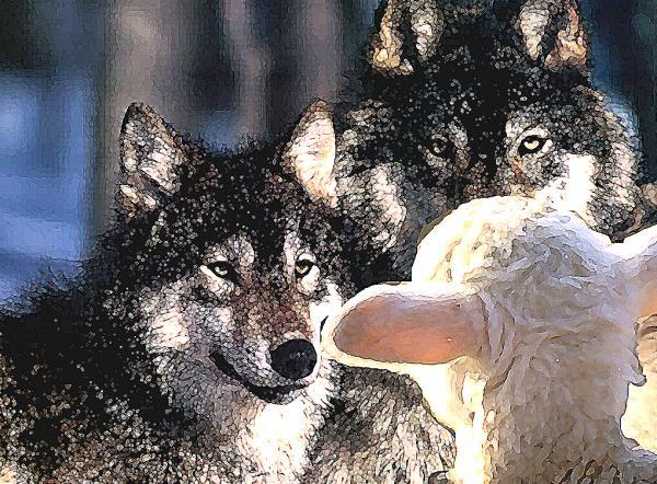 Jasidi News De Ovejas Y Lobos El Mensaje De Purim