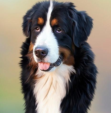 Ciri-ciri Binatang Anjing