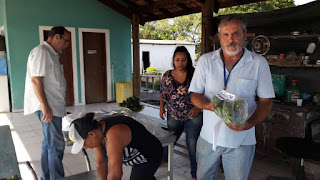 Colhidos  na terça 10/03,na horta municipal, 50 quilos de pimentões orgânicos serão encaminhados para creches e escolas da Ilha