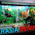 Ingin Punya Air Aquarium Ikan Hias yang Jernih, Bening dan Bersih? Perhatikan 4 Faktor Penting Berikut!