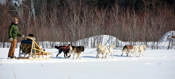 Dogsledding - Embrace Christmas Spirit in Beautiful Quebec City, Canada