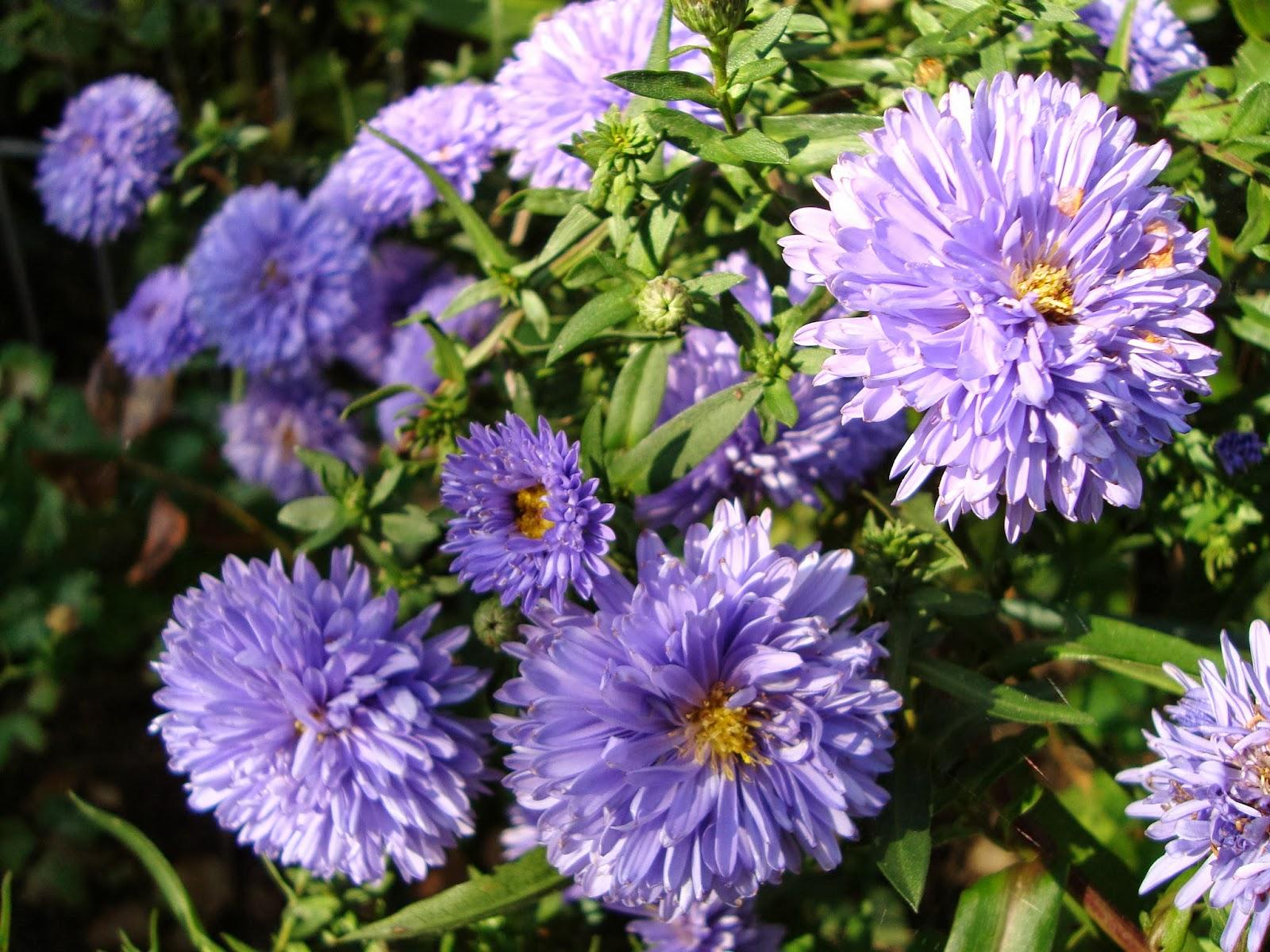Passionn ment jardin petit tour au jardin - Petit jardin romantique tours ...