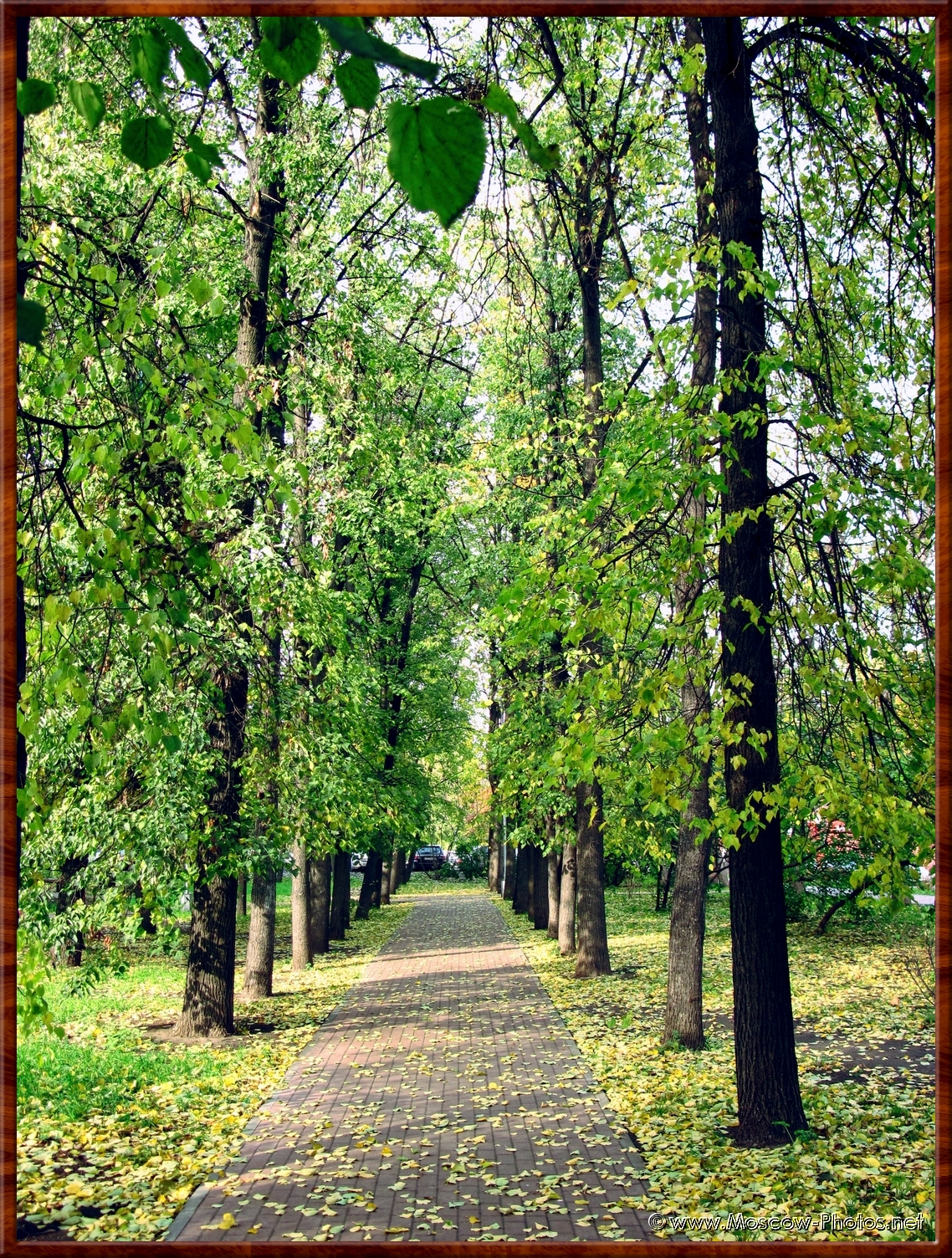 Path in the moscow autumn Park