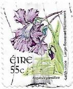Selo Pinguicula grandiflora