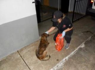 """""""Polícia Civil localiza cachorros em situação de maus tratos na cidade de Barra do Turvo"""""""