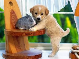anjing dan kelinci