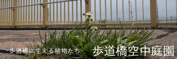 歩道橋空中庭園