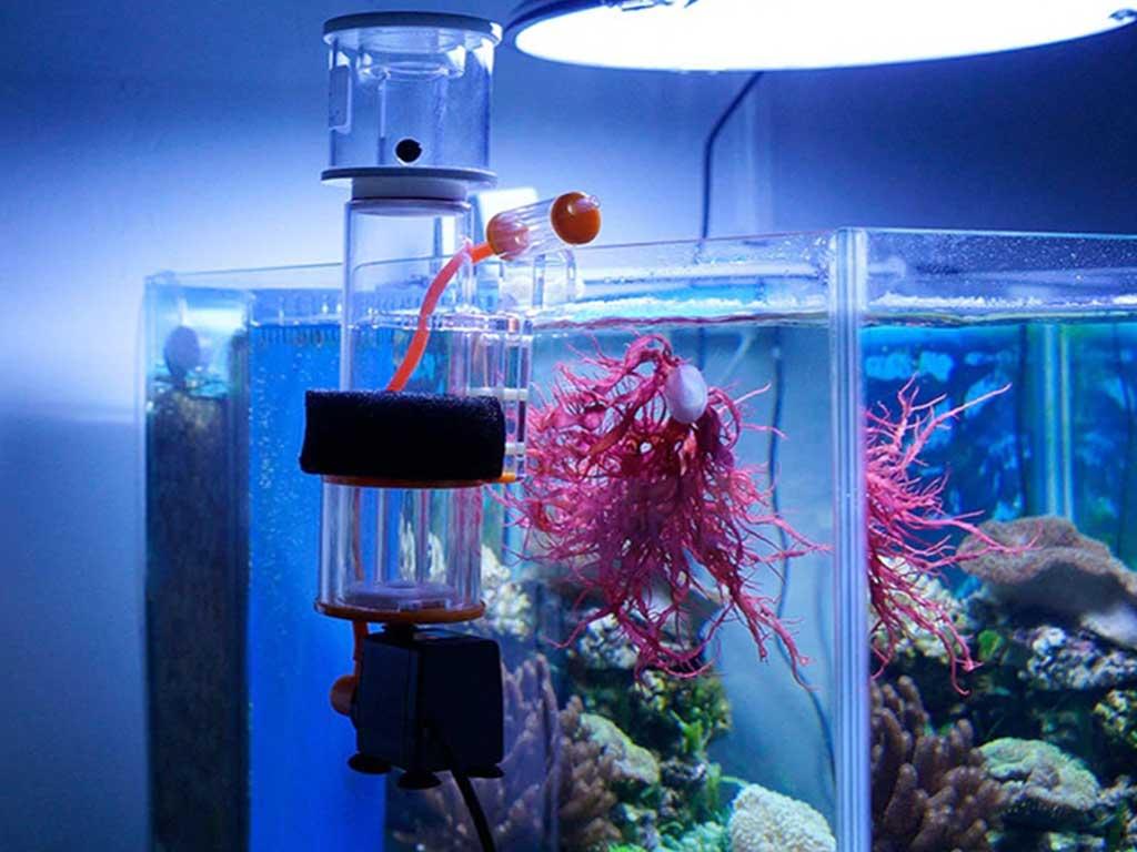 Tuzlu Su Akvaryumlarındaki Protein Süzücüsü