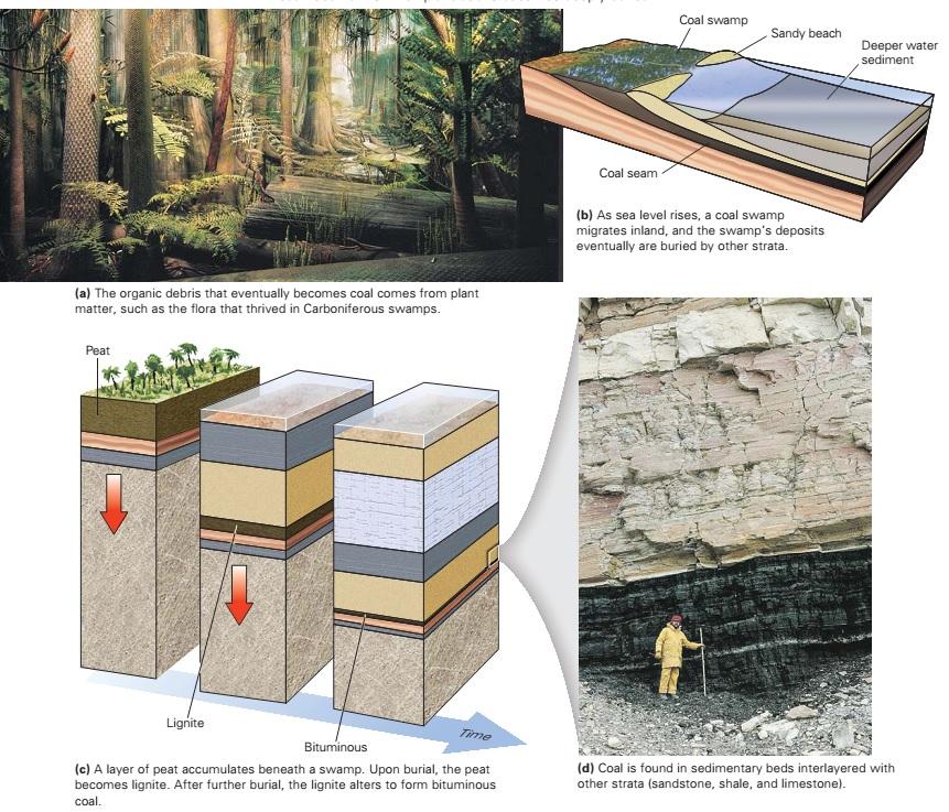 Petroleum Geology Learning Geology