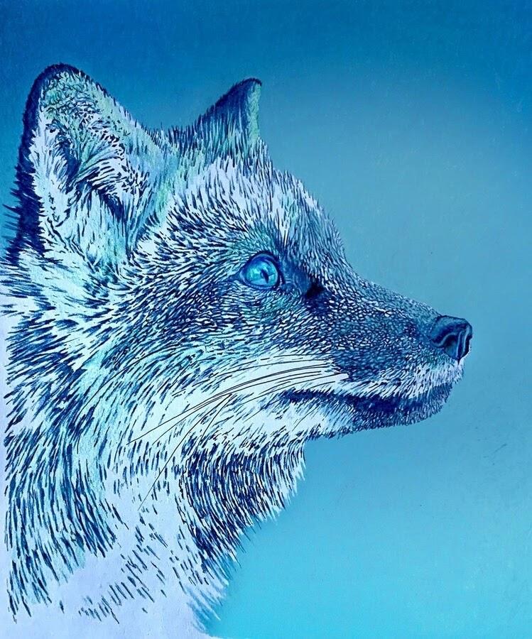 01-Blue-Fox-Anna-www-designstack-co