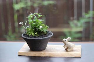 盆栽作品 うさぎの人形ともに