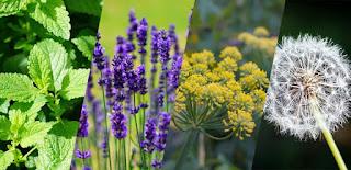 ... plantas que melhoram a energia da casa...confira as dicas