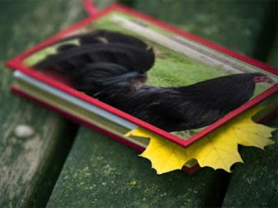 cuadro de gallo Wingate Brown Reds.