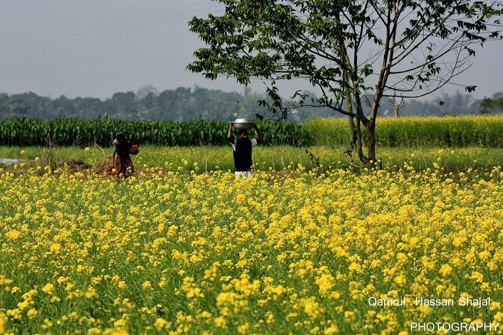 Bangladesh Photos & Images