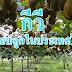 กีวี สามารถปลูกในประเทศไทยได้