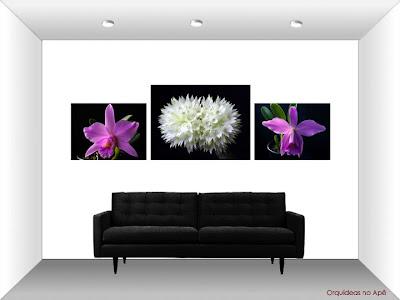 Fotos de orquídeas na parede