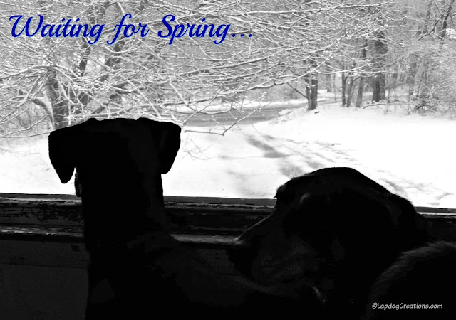 2 rescue dogs watching snow fall